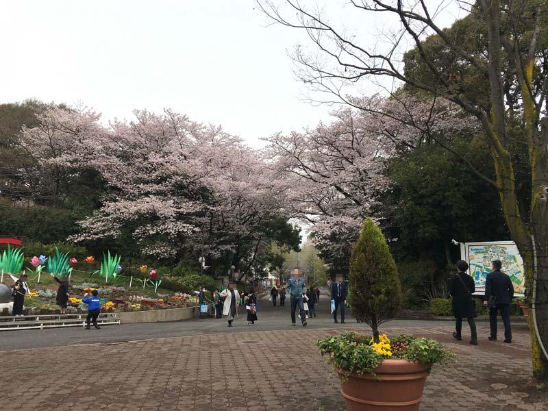 としまえんの桜