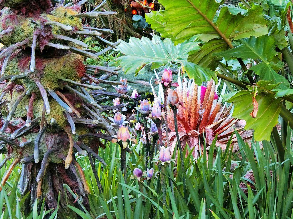 パンドラの植物